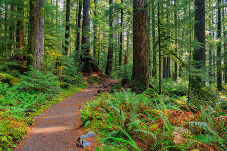 Sol Duc rainforest at Olympic National Park, Oregon Coast Stock Photo