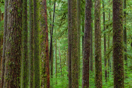 temperate: Sol Duc rainforest at Olympic National Park, Oregon Coast Stock Photo