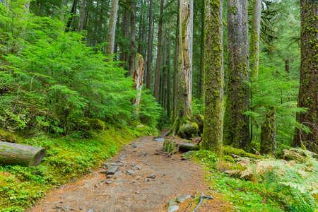 sol duc: Sol Duc rainforest at Olympic National Park, Oregon Coast Stock Photo