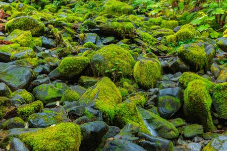 rainforest background: Sol Duc rainforest at Olympic National Park, Oregon Coast Stock Photo