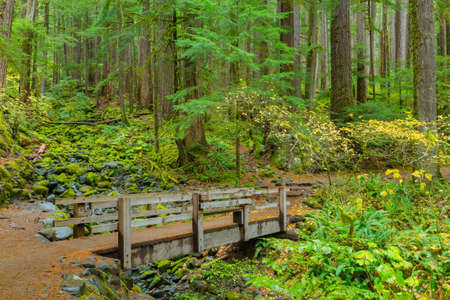 sol: Sol Duc rainforest at Olympic National Park, Oregon Coast Stock Photo