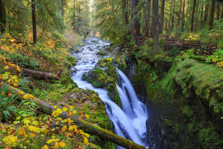 Sol Duc waterfall in rainforest at Olympic National Park, Oregon Coast Stok Fotoğraf