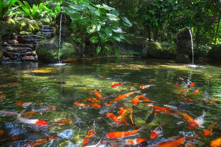 kl: Gold carp in the pond, KL Bird Park, Malaysia