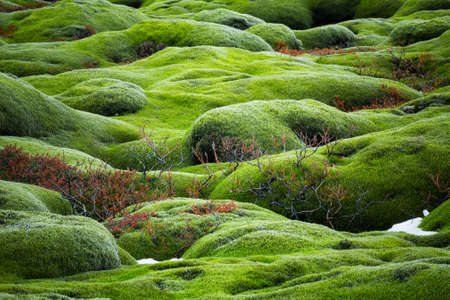 lava field: Iceland lava field covered with green moss Stock Photo