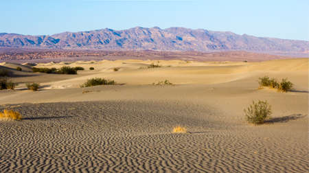 stovepipe: Mesquite dunes in Death Valley, California, USA