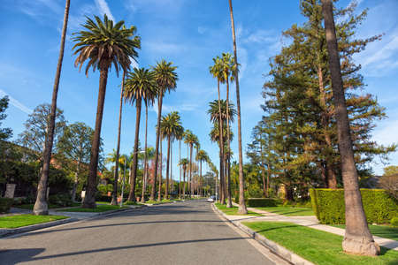 Beverly Hills street with palm trees, Los Angeles 写真素材