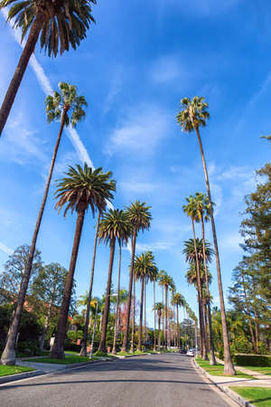 Beverly Hills street with palm trees, Los Angeles 스톡 콘텐츠