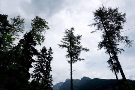 High Tatra mountains landscapes, forests, trees, rocks and plants, summer time