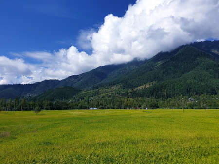 View of cloudy blue sky beautiful villages and rice fields of villagers in Indian states. Green and yellow golden colour crops in India are best destination for travellers.