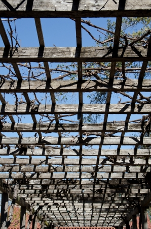 overhang: an old wooden overhang for vines and plants at the Mission in San Luis Obispo in Central Ca