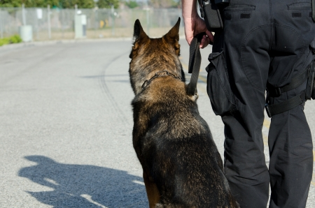 A police dog and his handler looking away