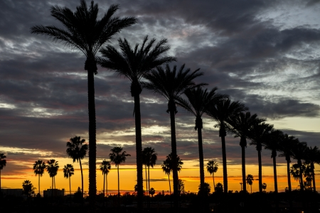 Palm trees on Gene Autry Way at dusk in the City of Anaheim, CA