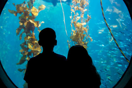 A brother and sister gaze into an aquarium looking at sea life Stock Photo - 24496424