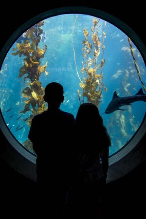 A brother and sister gaze into an aquarium looking at sea life. Stock Photo - 24562908