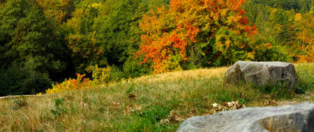 tranquil atmosphere: Golden autumn landscape with rocks in the background a forest. Panorama