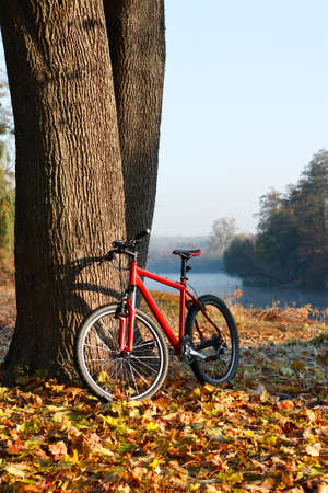 Red bike lit the rays of bright morning sunlight standing near a trunk large tree