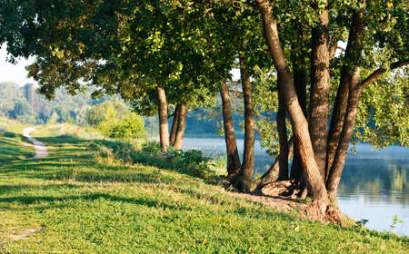 Summer morning sunlight landscape with green trees on the riverbank