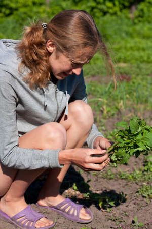 Young Woman with Tomato Seedlings in hands in the Garden  Planting Seedlings of Tomatoes photo