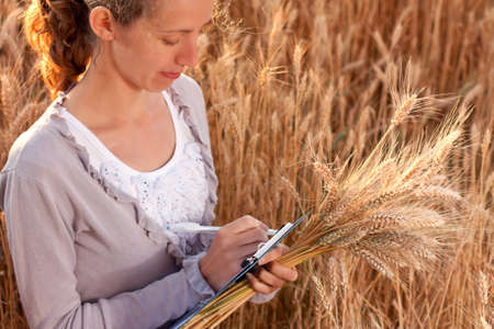 agronomist: Young woman agronomist or a student with document in hand writes results of her experiment in the wheat field Stock Photo