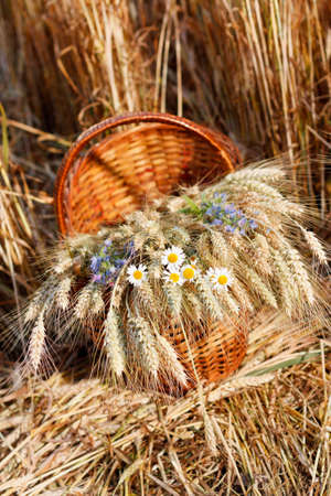 Ripe ears of wheat and wild flowers in basket against natural background in the field  Harvest concept photo