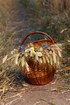 golden daisy: Basket full of ripe ears of wheat and wild flowers against natural background in the field  Harvest concept Stock Photo