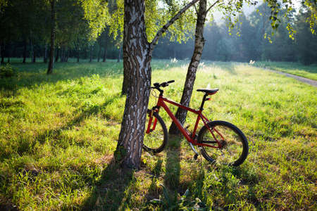 Red bike standing near a birch trunk on a spring sunny park. Travelling by bicycle and a healthy lifestyle photo