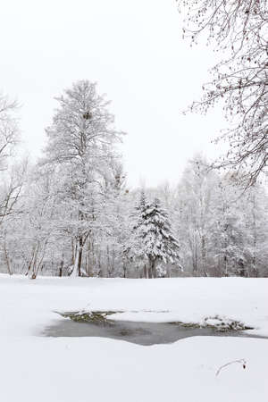 thawed: Thawed patch in the snow  Winter landscapes  Stock Photo