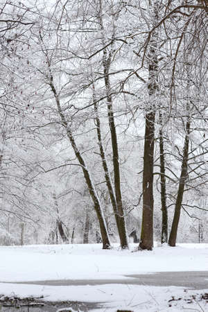 Winter fairy tale in a snowy forest  Landscape photo