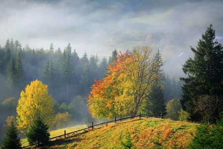 Golden Autumn. Foggy morning in mountains. Carpathians landscape, Ukraine, Europe