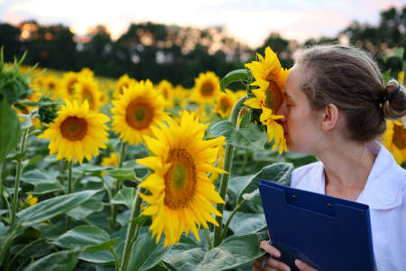 Woman agronomist or a student or a scientist smelling sunflower in summer field. Agricultural business
