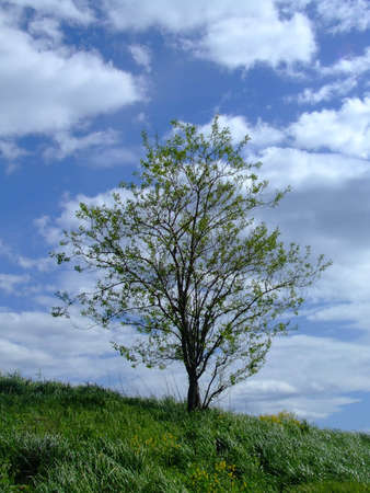 A tree blooming on a Spring day on Spectacle Island, a Boston Harbor Island Stock Photo