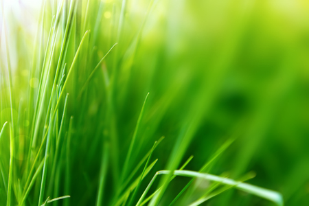 clean environment: Spring or summer background with green grass