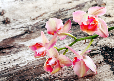 orchid flower on old wooden background Zdjęcie Seryjne