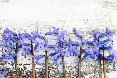 Hyacinth on wooden background Imagens