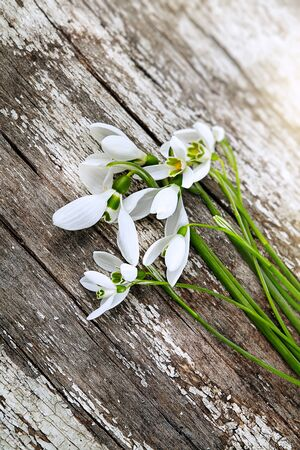 Beautiful fresh snowdrops on wooden background