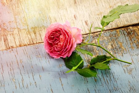 pink roses bouquet on wooden background Zdjęcie Seryjne