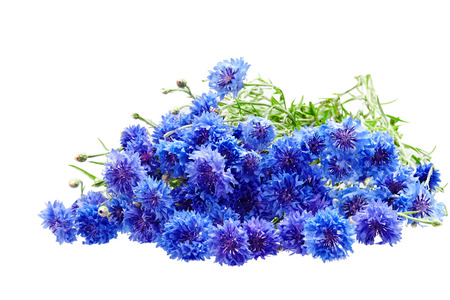 Beautiful bouquet of cornflowers  isolated on white background