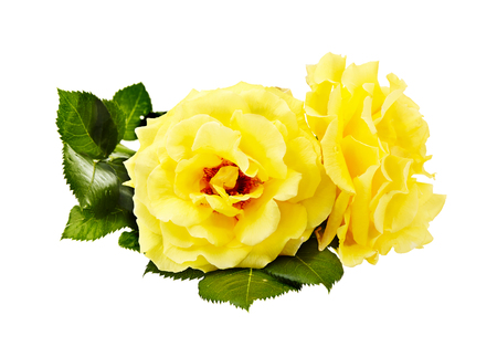 yellow roses bouquet on a white background