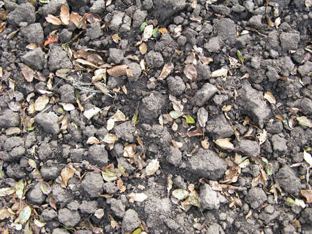 dug: Dug Over Chestnut Soil in Autumn Close Up