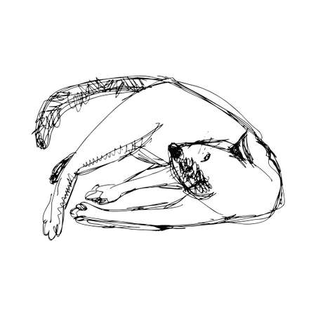 hairy legs: sleeping cat