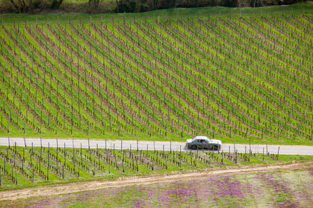 A classic sports car driving through a bvineyard for a short weekend vacation during spring photo