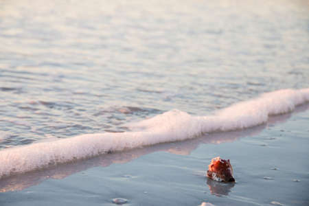 Bright red shell in the water at the beach during sunset washed away by waves photo