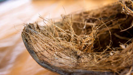 Close up of the detail of dried coconut fiber in the coconut fruit on the table. Shallow depth of field photograph.