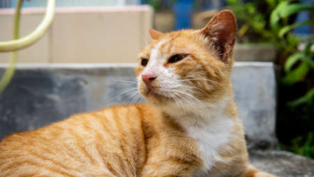 Close up view of a ginger stripes cute stray cat resting and laying down on the staircase. Animal and homeless concept. Selected focus on foregrounds.
