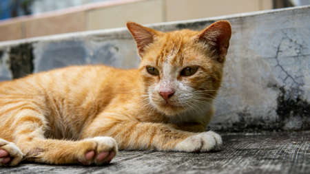 Close up view of a ginger stripes cute stray cat resting and laying down on the staircase. Animal and homeless concept.
