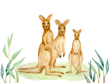 Watercolor hand painting illustration of Kangaroo family, the mammal wildlife animal with brown hair standing on green lawn and branches of eucalyptus leaves on foreground, isolated on white and clipping paths 写真素材