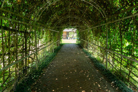 The curve wooden trellis tunnel for vegetable creeper climbing gallery, cover the brow brick stepping stone in agriculture farm