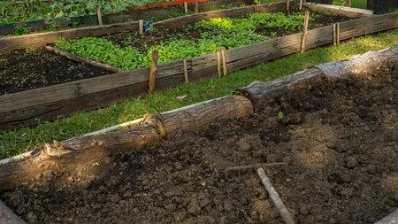 Preparing soil in wooden border for plantation of vegetable planting in garden nursery