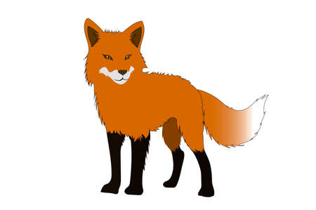 Fox isolated on a white backgrounds. Vector illustration Vector