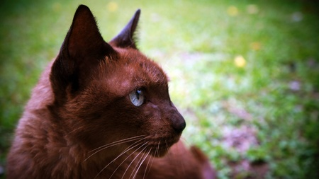brown cat photo